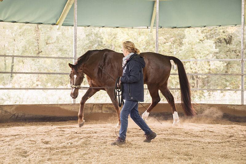 Den Athleten Pferd gymnastizieren? Ja gerne!