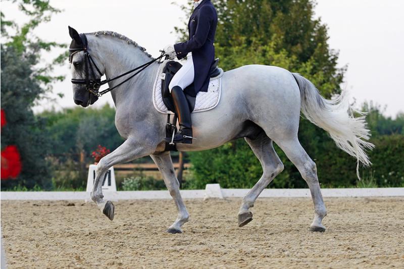 Moderne Pferde mit dem Rücken zur Wand